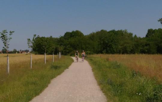 Grün Radroute vom Marchfeldkanal isn Donaufeld